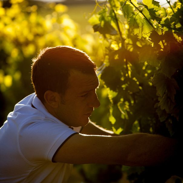 Adrien Fabre en el viñedo