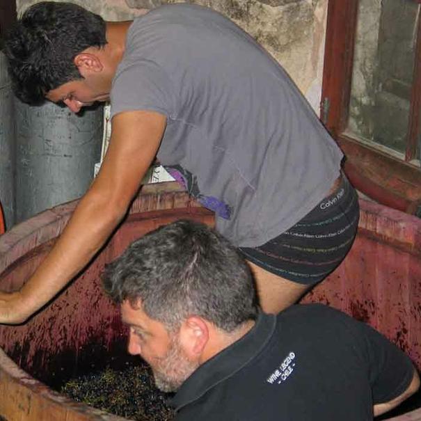 Tradicional pisado de la uva para prensarla